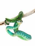Colorful Sri Lankan Palm Viper Stock Photos