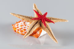 Star fishes Stock Image