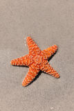 Colorful Starfish on Sandy Beach Stock Images