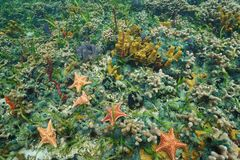 Colorful starfish and sea life underwater Royalty Free Stock Photo