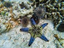 Starfish with a sea urchin