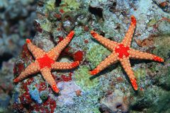 Colorful starfish Stock Photos