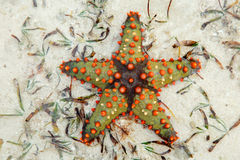 Colorful starfish Stock Photography