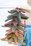 Colorful Starfish Stock Photo