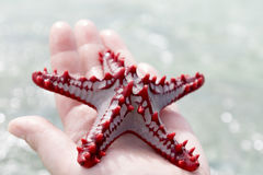 Colorful Starfish Stock Photo