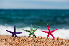 Colorful starfishes Stock Images