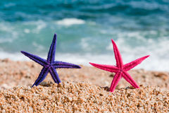 Colorful starfishes Royalty Free Stock Images