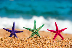 Colorful starfishes Stock Image
