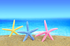 Colorful starfishes on the beach Royalty Free Stock Image