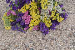 Colorful statis flowers are located on top of sandy beach. Space for text Stock Photography