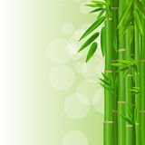 Colorful Stems and Bamboo Leaves Background Stock Photography