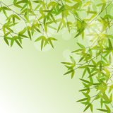 Colorful Stems and Bamboo Leaves Background Royalty Free Stock Photography