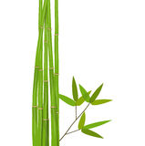 Colorful Stems and Bamboo Leaves. Vector Royalty Free Stock Image
