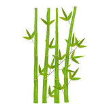 Colorful Stems and Bamboo Leaves. Vector Royalty Free Stock Photos
