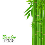 Colorful Stems and Bamboo Leaves. Vector Royalty Free Stock Photo