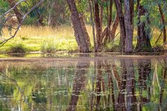 Colorful Still Water Reflections On A River. Beautiful water reflections in early morning light on a still river in Australia stock images