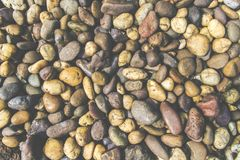 Colorful stone texture with dry leaf, soil and plant Royalty Free Stock Photo