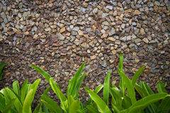 Colorful stone wall texture with green leaves Royalty Free Stock Photo