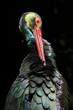 Colorful stork Royalty Free Stock Photo