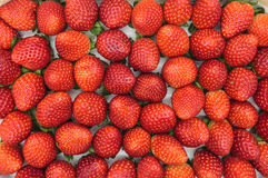 Colorful strawberry close up. Colorful strawberry bunch just from the field. Can be used as background or detailed close up picture Stock Photos