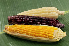 Colorful streamed sweet corn ready sserved .  Selective focus Royalty Free Stock Photos