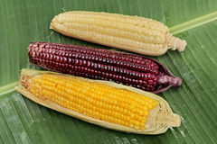 Colorful streamed sweet corn ready sserved . Top view. Royalty Free Stock Images