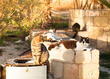 Colorful street cats sitting near the garbage tank in the sunset Stock Photography