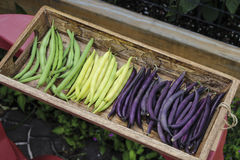 Colorful String Beans. Image of Colorful String Beans Royalty Free Stock Photography