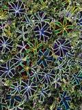 Colorful striped petunias. royalty free stock photos