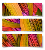 Colorful stripes Background. Illustration of colorful stripes background banner Stock Photos