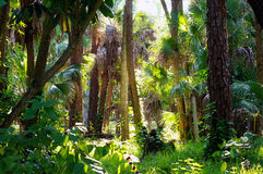 Colorful subtropical forest morning Stock Photos