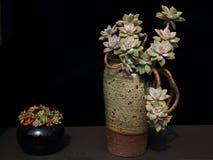Colorful Succulent plant Stock Photos
