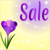Colorful summer background design with a purple crocus flower. Spring sale banner. Sale of posters, sale of leaflets, sale of vectors Royalty Free Stock Image
