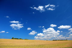 Colorful summer field landscape. Stock Photos