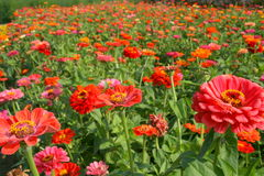 Colorful summer fields Stock Photos