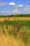 Colorful summer fields Royalty Free Stock Photo