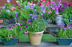Colorful summer flower planters Stock Photo