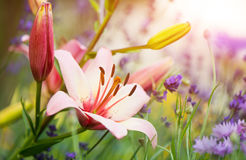 Colorful summer flowers Stock Image
