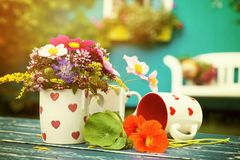 Colorful summer flowers in a coffee cup royalty free stock photos