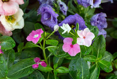 Colorful summer flowers stock photography