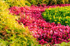Colorful Summer Garden Royalty Free Stock Photo