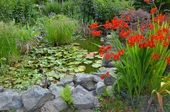 Colorful summer garden pond Stock Image