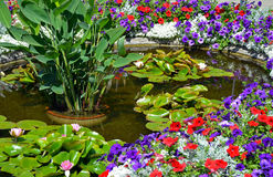 Colorful summer garden pond Royalty Free Stock Image