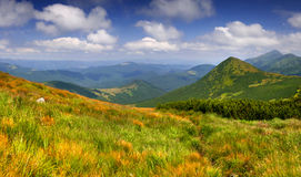Colorful summer landscape. In the mountains Royalty Free Stock Photography