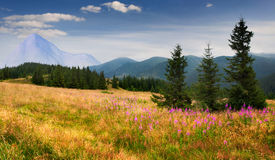 Colorful summer landscape Royalty Free Stock Photo