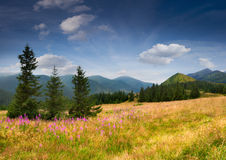 Colorful summer landscape Stock Image