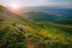 Colorful summer landscape in the Carpathian mountains.. Mountain valley during sunrise / sunset. Natural summer landscape Stock Photography
