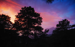 Colorful summer landscape in the Carpathian mountains. Sunset.  Royalty Free Stock Photo