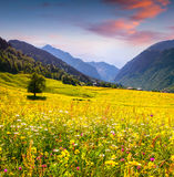 Colorful summer landscape in Caucasus mountains Stock Photos