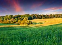 Colorful summer landscape Stock Image